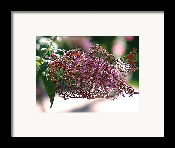 Flower Framed Print featuring the photograph Beautiful Lady In A Spanish Veil by Kevin Callahan
