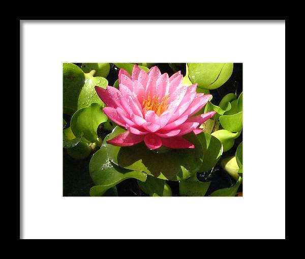 Nature Framed Print featuring the photograph Beautiful by Line Gagne