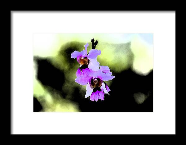 Orchid Framed Print featuring the photograph Beautiful Orchid by Nanette Hert