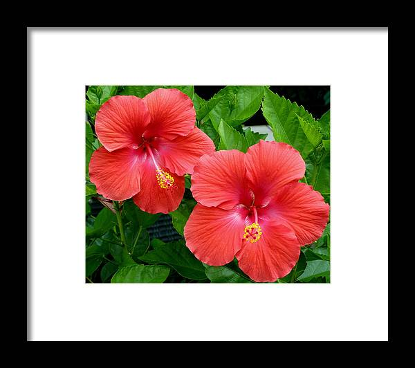 Flowers Framed Print featuring the photograph Beautiful Pair by Jeanette Oberholtzer