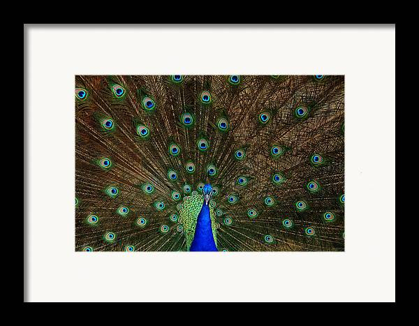 Bird Framed Print featuring the photograph Beautiful Peacock by Larry Marshall