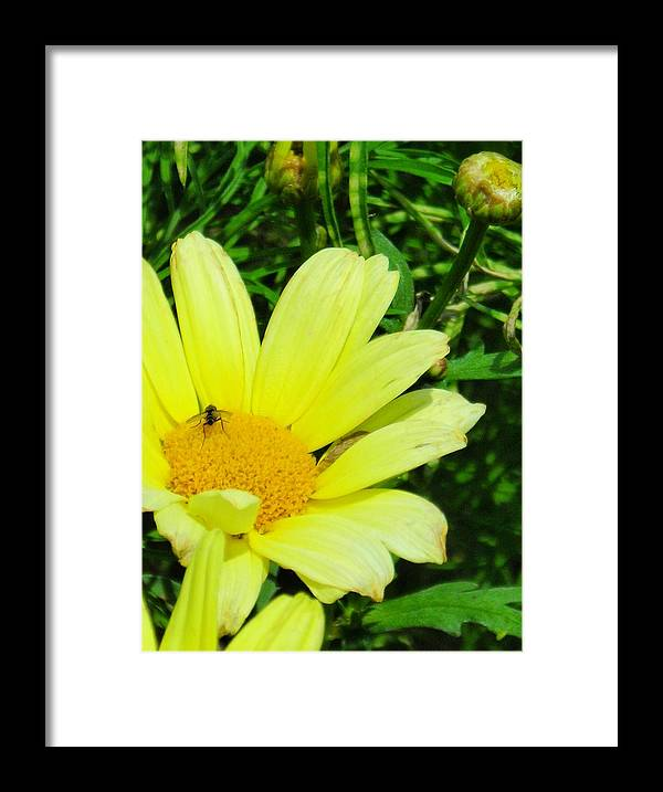 Flower Framed Print featuring the photograph Beautiful by Peter Mowry