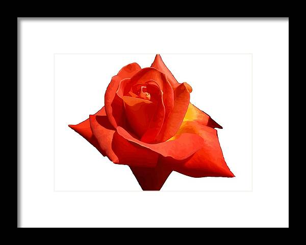 Rose Framed Print featuring the photograph Beautiful Red Rose Photograph Vector by Taiche Acrylic Art