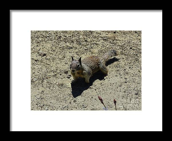 Squirrel Framed Print featuring the photograph Beautiful Squirrel Standing In A Sandy Area In California by DejaVu Designs
