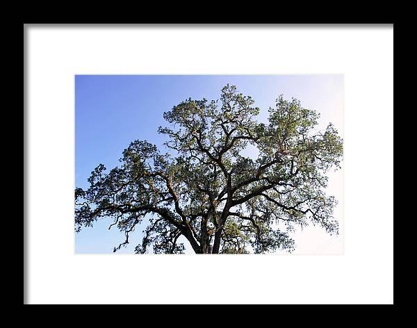 Tree Framed Print featuring the photograph Beautiful Tree Blue Sky Sunshine by Matt Harang