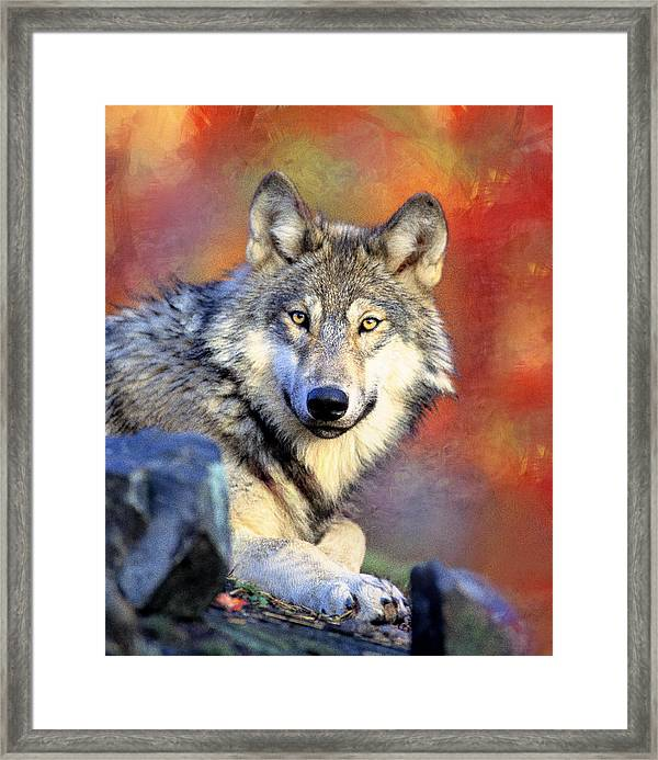 Beautiful Wolf Art Framed Print By Georgiana Romanovna