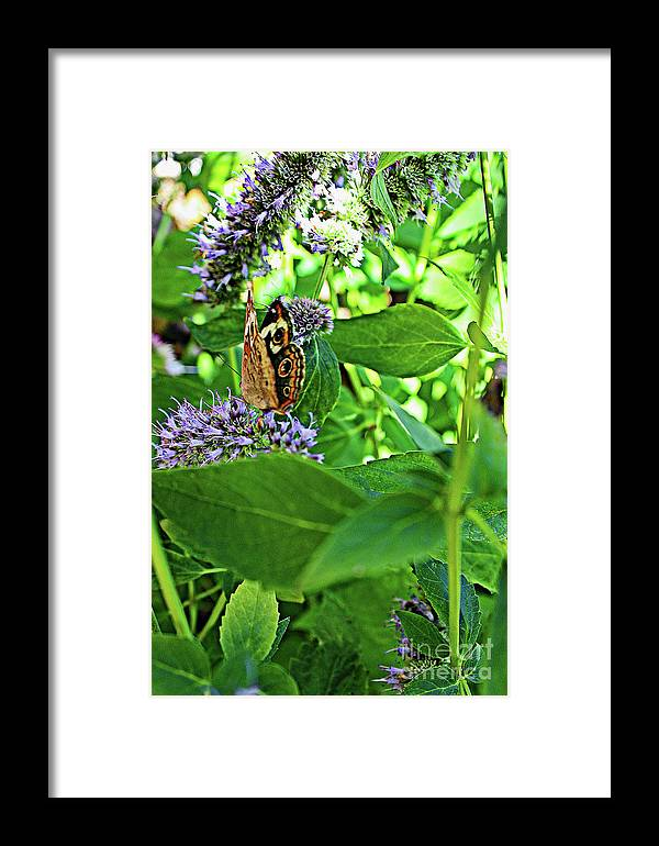 Nature Framed Print featuring the photograph Beauty Among The Leaves by Don Baker