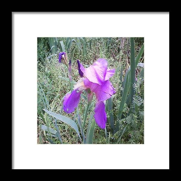 Flower Framed Print featuring the photograph Beauty by Carla Fionnagain