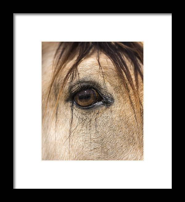 Animals Framed Print featuring the photograph Beauty In The Eye by Lisa Moore