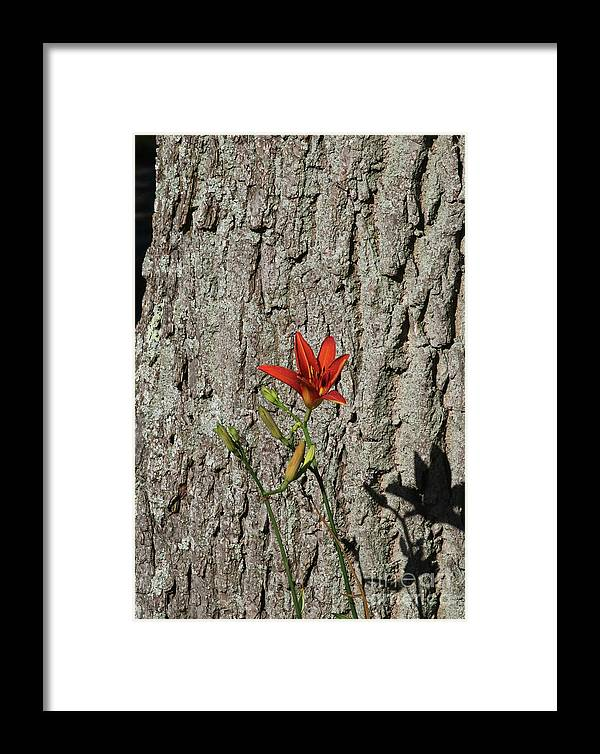 Flower Framed Print featuring the digital art Beauty Is In The Details by Jack Ader