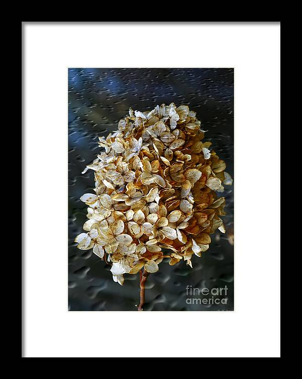 Flower Framed Print featuring the photograph Beauty Of Old by Deborah Benoit
