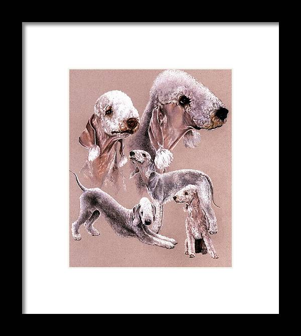 Dog Framed Print featuring the drawing Bedlington Terrier by Barbara Keith