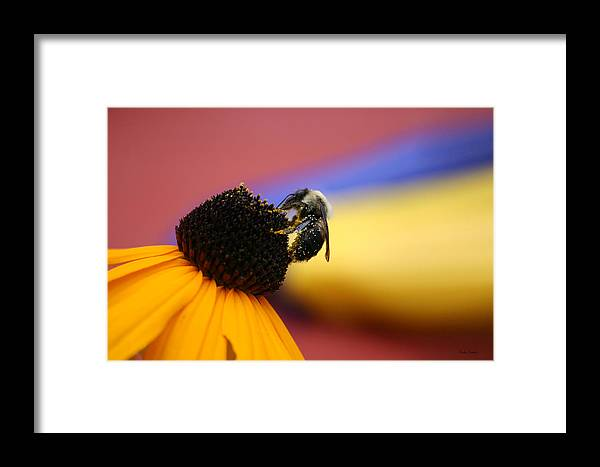 Insects Framed Print featuring the photograph Bee All You Can Bee by Linda Sannuti