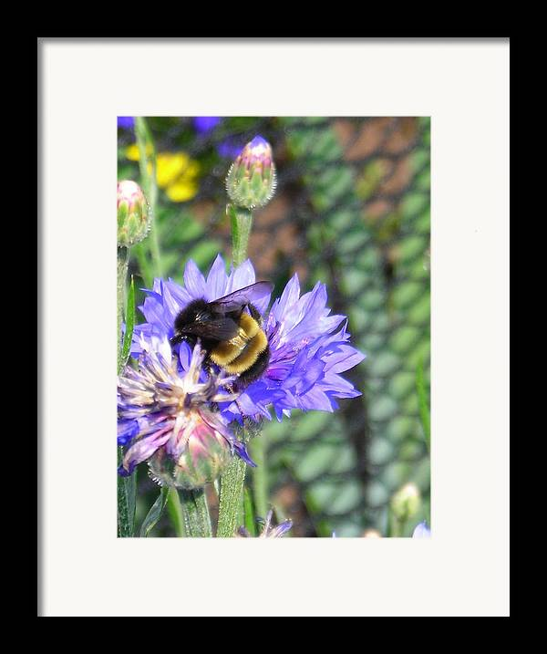 Bee Framed Print featuring the photograph Bee Bee by Peter Mowry