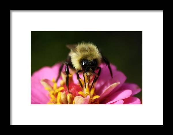 Bee Framed Print featuring the photograph Bee Good by Annie Babineau