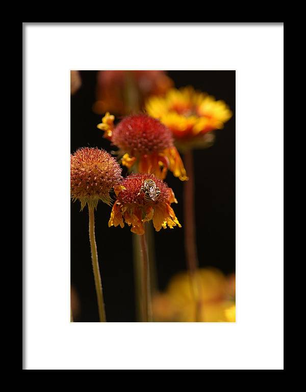 Bee Framed Print featuring the photograph Bee In Zion National Park by R D Frazier