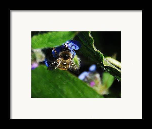 Framed Print featuring the photograph Bee by JK Photography