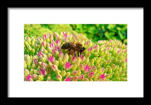 Flowers Framed Print featuring the photograph Bee On Flower by Larry Keahey