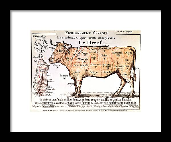 Le Boeuf; Cow; Cut; Joint; Food; Animal; Butchering Framed Print featuring the drawing Beef by French School