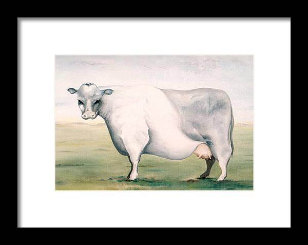 Beef Framed Print featuring the painting Beef Holocaust I by Mark Cawood