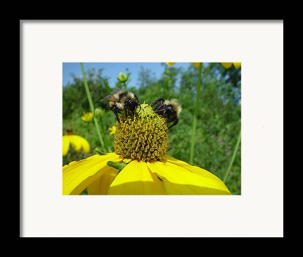 Nature Framed Print featuring the photograph Bees At Work by Eric Workman