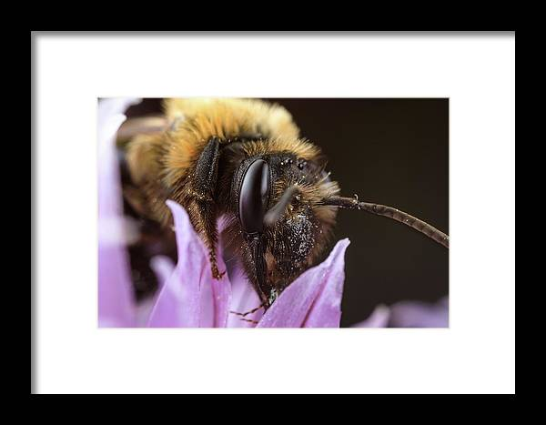 Macro Bee Bees Apiary Extreme Closeup Close Up Close-up Ma Mass Massachusetts Insect Brian Hale Brianhalephoto Eyes U.s.a. Usa Newengland New England Framed Print featuring the photograph Bee's Eye by Brian Hale