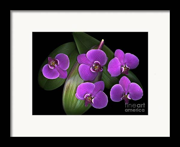 Purple Framed Print featuring the photograph Bees On Green by Christian Slanec