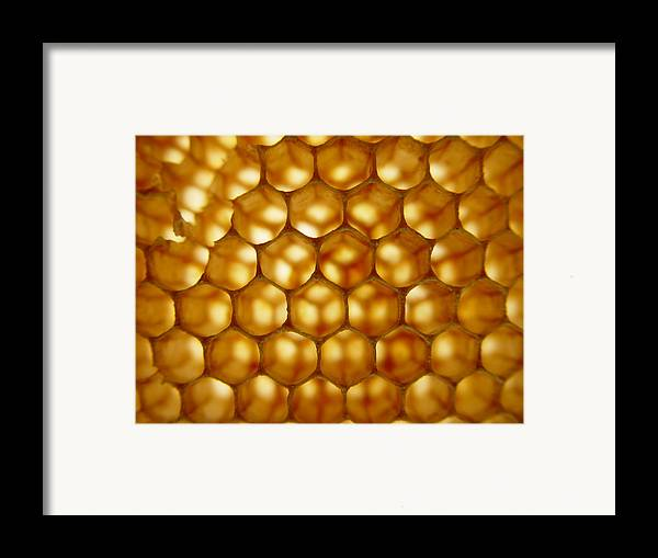 Nature Framed Print featuring the photograph Bees On Holiday by Eric Workman