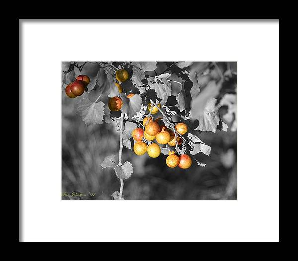 Muscadine Framed Print featuring the photograph Before The Wine by Lisa Johnston