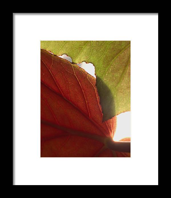 Floral Framed Print featuring the photograph Begonia 1 by Art Ferrier