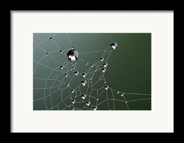 Web Framed Print featuring the photograph Behold by Rebecca Cozart