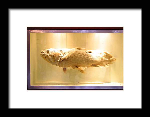 Jez C Self Framed Print featuring the photograph Beige Fish by Jez C Self