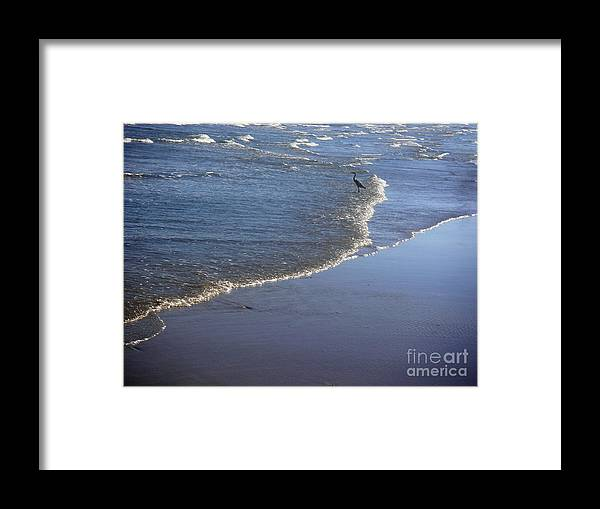 Nature Framed Print featuring the photograph Being One With The Gulf - At Peace by Lucyna A M Green
