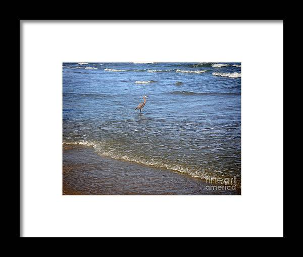Nature Framed Print featuring the photograph Being One With The Gulf - Detached by Lucyna A M Green