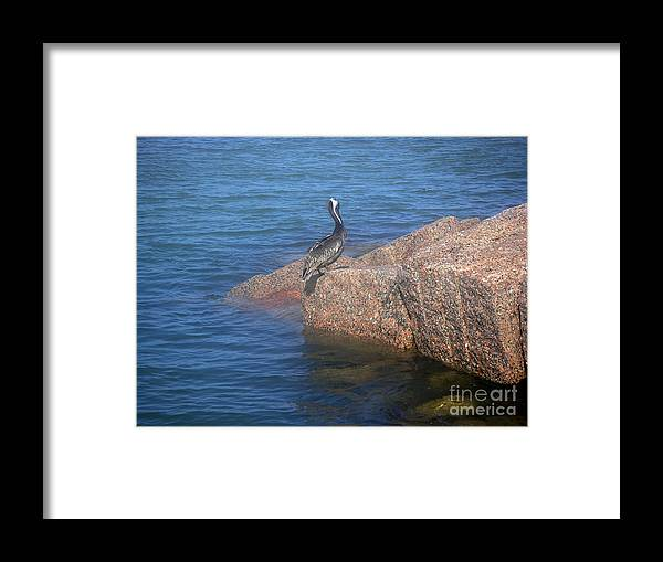 Nature Framed Print featuring the photograph Being One With The Gulf - Ignoring by Lucyna A M Green