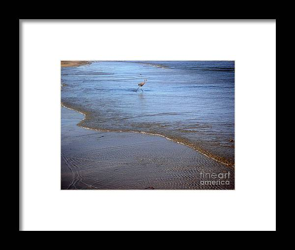 Nature Framed Print featuring the photograph Being One With The Gulf - Playing by Lucyna A M Green