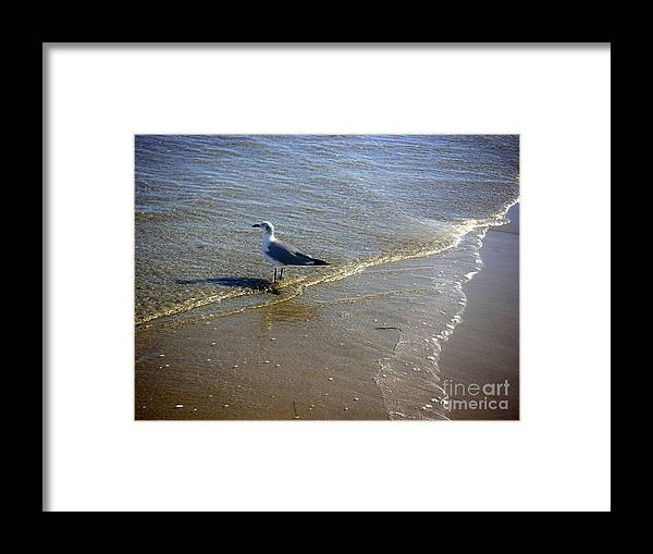 Nature Framed Print featuring the photograph Being One With The Gulf - Reflecting by Lucyna A M Green