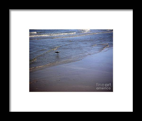 Nature Framed Print featuring the photograph Being One With The Gulf - Spotting by Lucyna A M Green