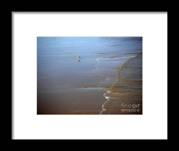 Nature Framed Print featuring the photograph Being One With The Gulf - Still by Lucyna A M Green