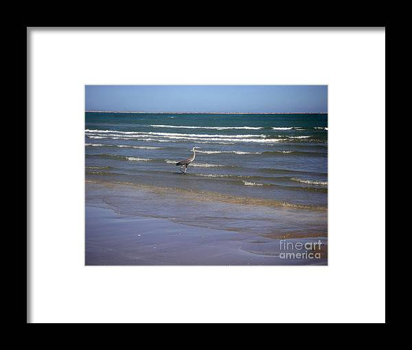 Nature Framed Print featuring the photograph Being One With The Gulf - Wading by Lucyna A M Green