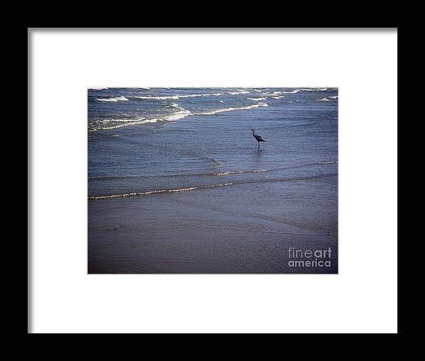 Nature Framed Print featuring the photograph Being One With The Gulf - Watching by Lucyna A M Green
