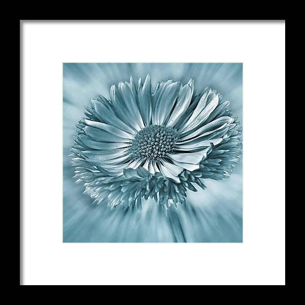Beautiful Framed Print featuring the photograph Bellis In Cyan  #flower #flowers by John Edwards