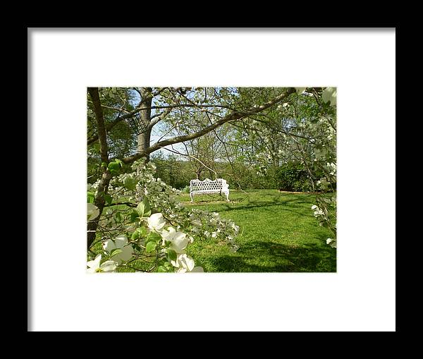 Bench Framed Print featuring the photograph Bench In Spring by Utopia Concepts