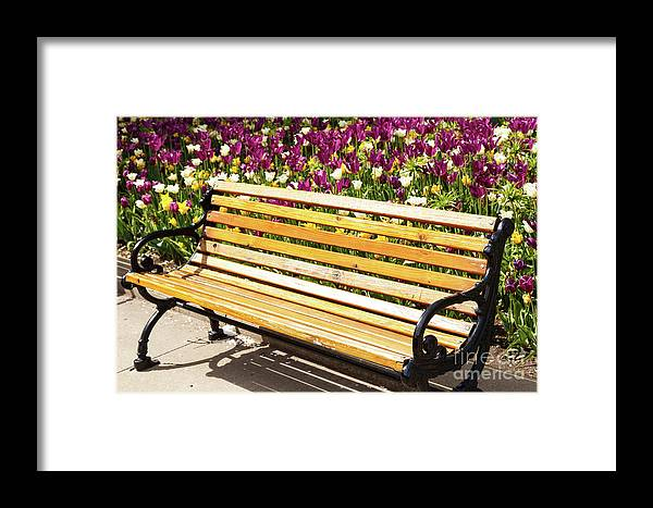 Tulips Framed Print featuring the photograph Bench In The Tulips by Terri Morris