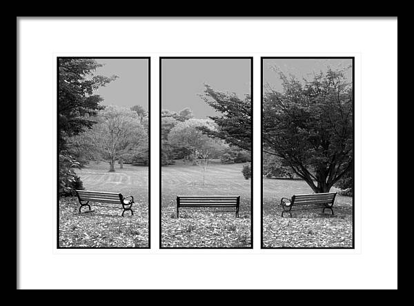Nature Framed Print featuring the digital art Bench View Triptic by Tom Romeo