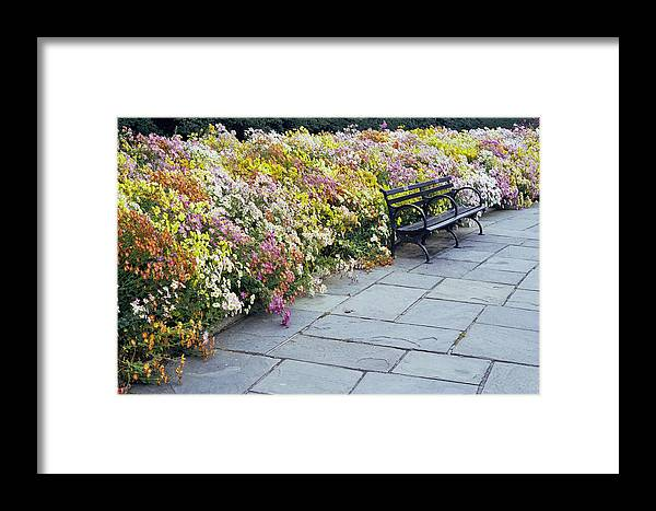 Fall Flowers? Framed Print featuring the photograph Bench by Wes Shinn