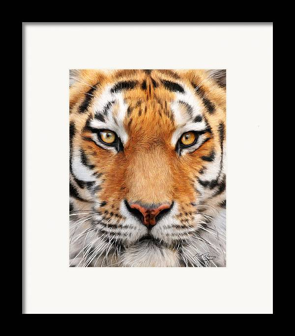 Wildlife Art Framed Print featuring the painting Bengal Tiger by Bill Fleming