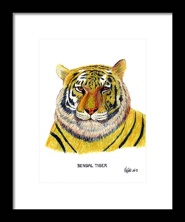 Tiger Framed Print featuring the drawing Bengal Tiger by Frederic Kohli