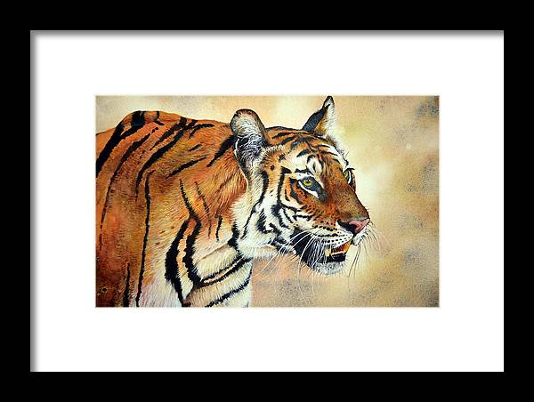 Bengal Tiger Framed Print featuring the painting Bengal Tiger by Paul Dene Marlor
