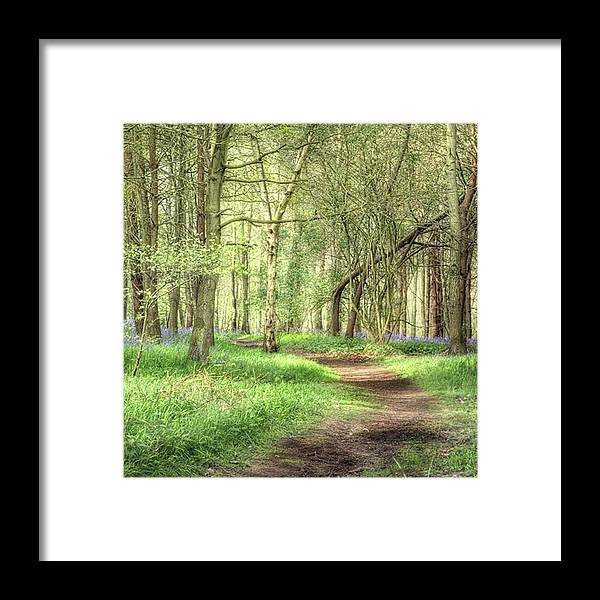 Nature Framed Print featuring the photograph Bentley Woods, Warwickshire #landscape by John Edwards